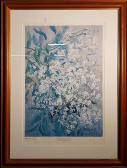 Sale 9208 - Lot 2047 - 12 Framed Prints from the Power House Collection of Australian Floral Studies 95.5x72.5cm