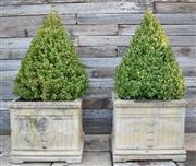 Sale 9040H - Lot 95 - A pair of composition stone planters with mature Buxus cones 45cm height 53cm depth x 53cm width