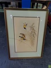 Sale 8613 - Lot 2045 - John Gould & H.C. Richter - NECTARINA AUSTRALIS hand-coloured lithograph, 70 x 51.5cm (frame), printed by Hullmandel & Walton -