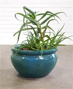 Sale 9255 - Lot 1411 - Blue glazed planter together with a potted plant (h:55cm)