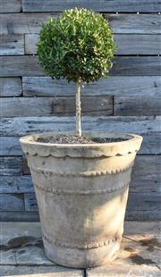 Sale 9040H - Lot 2 - A single terracotta planter with a Buxus sphere 50cm height 50cm diameter