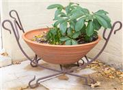 Sale 8550H - Lot 232 - A circular terracotta planter with plants, together with a wrought iron cradle frame, size of frame H 40 x W 70cm
