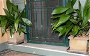 Sale 8080A - Lot 6 - Pair of square form planters with lilies (h27cm)