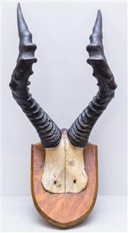 Sale 8287A - Lot 110 - A set of mounted Hartebeest horns by Edward Gerrard London, overall 56cm high x 28cm at widest point x 27cm at deepest point
