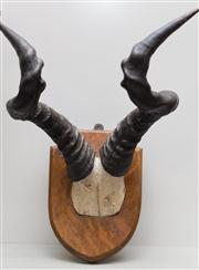 Sale 8287A - Lot 111 - A set of mounted Hartebeest horns by Edward Gerrard London, 43cm overall height x 37cm widest point x 29cm deepest point