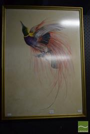 Sale 8518 - Lot 2054 - Reg Campell Bird of Paradise, pastel, 70 x 50cm, signed lower left