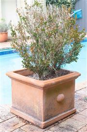 Sale 8550H - Lot 239 - A pair of square form terracotta planters, each planted with buxus, H 33 x W 40cm