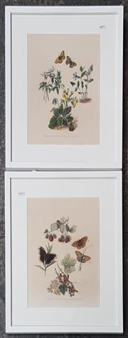 Sale 9036 - Lot 2075 - Pair of Early Natural Study colour lithographs by 54 x 45cm, each -