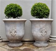 Sale 9087H - Lot 250 - A pair of terracotta French Anduze style pots with Buxus spheres. Pot height: 70cm, total height: 1m, pot diameter 60cm