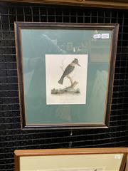 Sale 9008 - Lot 2026 - Hand Coloured Engraving Sacred Kings Fisher