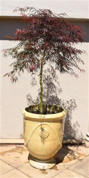 Sale 9087H - Lot 254 - A French Anduze style stoneware pot with standard Japanese maple. Pot height: 74cm, total height: 1.9m, pot diameter 60cm
