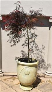 Sale 9087H - Lot 255 - A French Anduze style stoneware pot with standard Japanese maple. Pot height: 74cm, total height: 1.9m, pot diameter 60cm