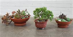 Sale 9151 - Lot 1448 - Collection of 3 potted succulents (various sizes )