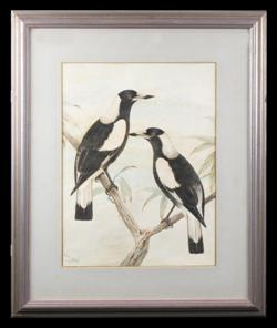Sale 7923 - Lot 519 - Neville Cayley - Magpies 44 x 33.5cm