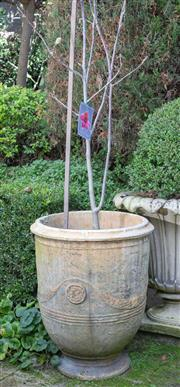 Sale 8568A - Lot 26 - A Spanish style composite jardinière, planted with magnolia Vulcan, H of pot 75cm