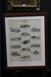 Sale 8306A - Lot 87 - William Home Lizars (1788 - 1859) - Leaves from the Book of Nature: British Fishes, Plate 12 53 x 40.5cm