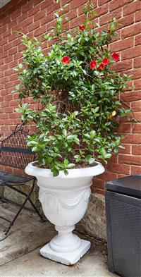 Sale 9080H - Lot 100 - A concrete white painted classical garden urn planted with madevilla vine, Height 70cm x Total Height approx. 195cm ,