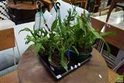 Sale 8532 - Lot 1113 - Tray of Mixed Orchids