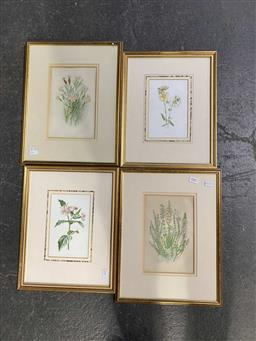 Sale 9176 - Lot 2083 - group of 4 botanical prints at various sizes