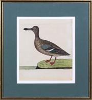 Sale 8298 - Lot 84 - Antique Ornithological Print - 'The Hen Shoveler'