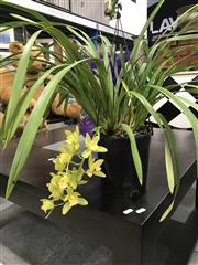 Sale 8787 - Lot 1070 - Yellow Cymbidium Orchid With Single Spike