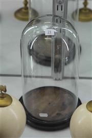Sale 8032 - Lot 21 - Victorian Glass Dome