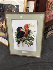Sale 8711 - Lot 2083 - John Gould Decorative Print, 66 x 51cm (frame)