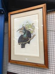 Sale 8711 - Lot 2072 - John Gould Decorative Print 83 x 63cm (frame)