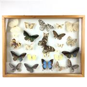 Sale 8758 - Lot 199 - Display of Butterflies, framed - some losses