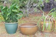 Sale 8550H - Lot 256 - A group of three circular garden pots including oriental style with plants, H 42cm & H 38cm, and another