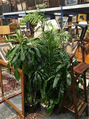 Sale 8851 - Lot 1041 - Collection of Indoor Plants