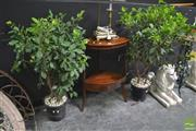 Sale 8299 - Lot 1003 - Pair of Hedging Ficus Plants