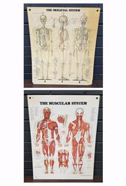Sale 8996 - Lot 1038 - Pair of Vintage Medical Charts (h:66 x w:51cm)