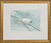 Sale 8365A - Lot 55 - Marion Coombs (XX - ) - Sulphur Crested Cockatoo 21 x 30cm