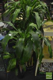 Sale 8307 - Lot 1045 - Collection of Indoor Plants