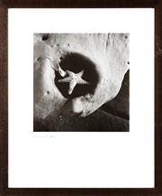 Sale 8346A - Lot 89 - Max Dupain - At Toowoon bay 1985 39 x 37cm