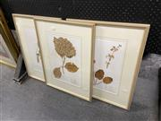 Sale 8927 - Lot 2095 - Set of Three Labelled Botanical Pressed Flowers