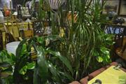 Sale 8307 - Lot 1099 - Collection of Indoor Plants