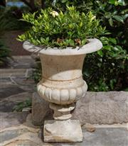Sale 8530A - Lot 4 - A pair of cast stone garden urns planted with gardenia plants with some small chips/minor losses, H 46 cm