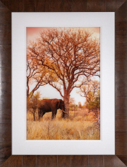 Sale 8677B - Lot 810 - Peter Lik (U.S.A)  photograph of an elephant butting a tree in a timber frame edition 889 of 950, total size 143cm x 110cm