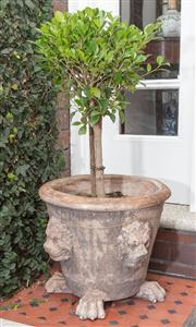 Sale 8530A - Lot 7 - A cast stone garden pot decorated with lion heads and paw feet, planted with topiary fig tree, H 41 x diam 47 cm