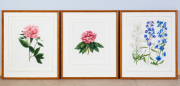 Sale 8677B - Lot 818 - Three botanical prints, damage to glass on one