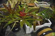 Sale 8307 - Lot 1071 - 4 Bromeliads + 4 Others
