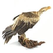 Sale 8758 - Lot 16 - Taxidermy Eagle on Timber Stand