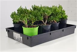 Sale 9255 - Lot 1443 - Collection of potted succulents (h:30cm)