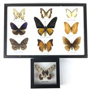 Sale 8758 - Lot 183 - Butterfly Collection (9) & a single example, both framed