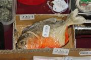 Sale 8169 - Lot 2264 - Taxidermy Piranha