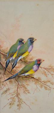 Sale 8000 - Lot 99 - Neville William Cayley (1886-1950) - Group of Gouldian Finches watercolour