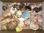 Sale 8567 - Lot 670 - Assorted Seashells