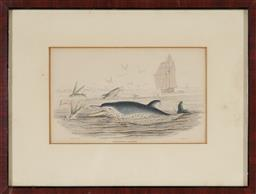 Sale 9159 - Lot 2005 - William Lizars (1788 - 1859) Pernettys Dolphin handcoloured engravings (after James Stewart) 20 x 26cm (frame) -